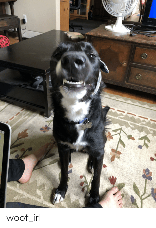 Irl, Dog IRL, and Woof: JU OGECOLOOGTDH  N woof_irl