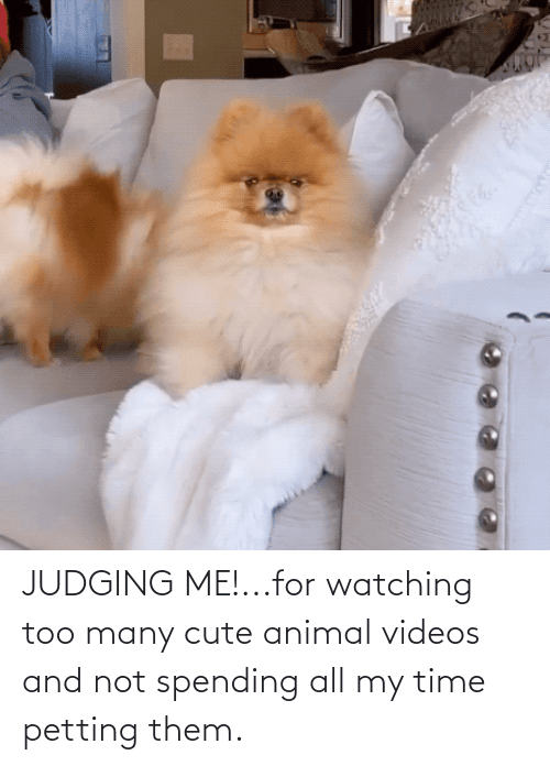 Animal Videos: JUDGING ME!...for watching too many cute animal videos and not spending all my time petting them.