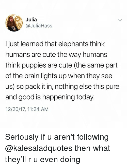 Cute, Memes, and Puppies: Julia  @JuliaHass  I just learned that elephants think  humans are cute the way humans  think puppies are cute (the same part  of the brain lights up when they see  us) so pack it in, nothing else this pure  and good is happening today  12/20/17, 11:24 AM Seriously if u aren't following @kalesaladquotes then what they'll r u even doing