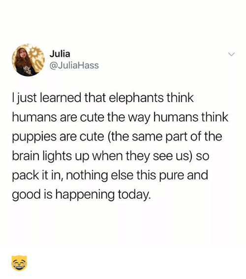 Cute, Memes, and Puppies: Julia  @JuliaHass  I just learned that elephants think  humans are cute the way humans think  puppies are cute (the same part of the  brain lights up when they see us) so  pack it in, nothing else this pure and  good is happening today. 😸