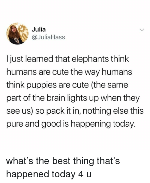Cute, Puppies, and Tumblr: Julia  @JuliaHass  I just learned that elephants think  humans are cute the way humans  think puppies are cute (the same  part of the brain lights up when they  see us) so pack it in, nothing else this  pure and good is happening today what's the best thing that's happened today 4 u