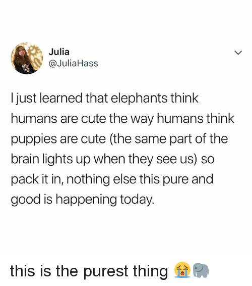 Cute, Puppies, and Brain: Julia  @JuliaHass  I just learned that elephants think  humans are cute the way humans think  puppies are cute (the same part of the  brain lights up when they see us) so  pack it in, nothing else this pure and  good is happening today. this is the purest thing 😭🐘