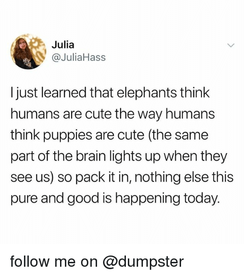 Cute, Puppies, and Brain: Julia  @JuliaHass  Ijust learned that elephants think  humans are cute the way humans  think puppies are cute (the same  part of the brain lights up when they  see us) so pack it in, nothing else this  pure and good is happening today. follow me on @dumpster