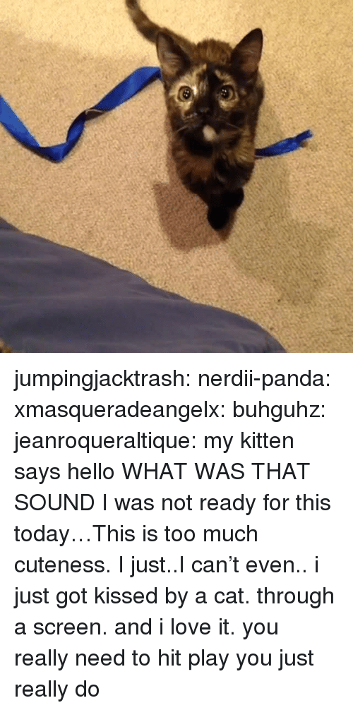 Ready For This: jumpingjacktrash: nerdii-panda:  xmasqueradeangelx:  buhguhz:  jeanroqueraltique:  my kitten says hello  WHAT WAS THAT  SOUND  I was not ready for this today…This is too much cuteness. I just..I can't even..  i just got kissed by a cat. through a screen. and i love it.  you really need to hit play you just really do