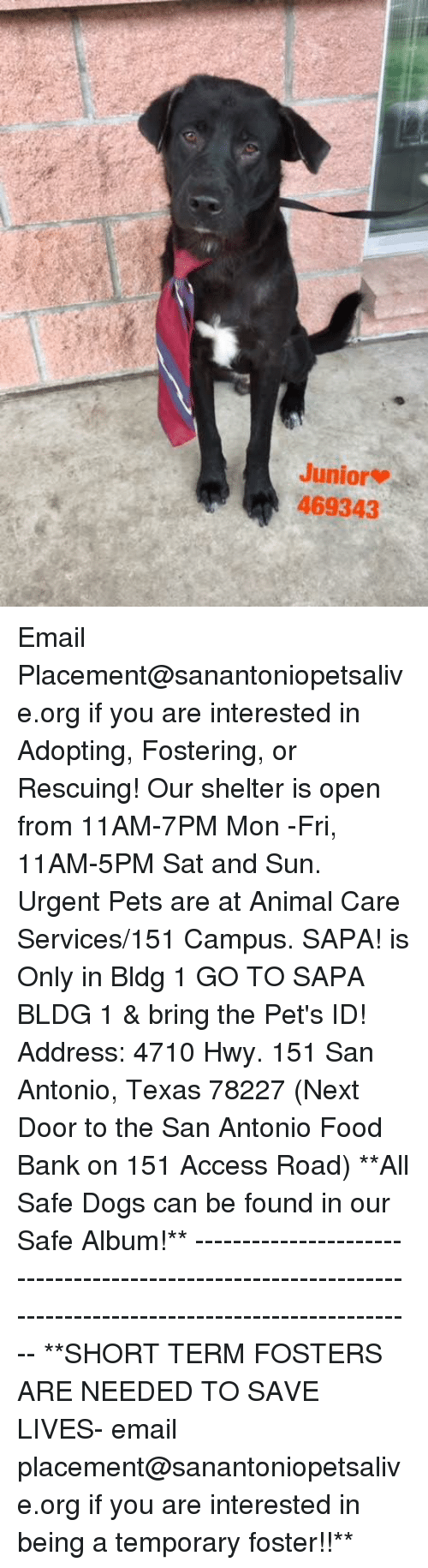 Dogs, Food, and Memes: Junior  469343 Email Placement@sanantoniopetsalive.org if you are interested in Adopting, Fostering, or Rescuing!  Our shelter is open from 11AM-7PM Mon -Fri, 11AM-5PM Sat and Sun.  Urgent Pets are at Animal Care Services/151 Campus. SAPA! is Only in Bldg 1 GO TO SAPA BLDG 1 & bring the Pet's ID! Address: 4710 Hwy. 151 San Antonio, Texas 78227 (Next Door to the San Antonio Food Bank on 151 Access Road)  **All Safe Dogs can be found in our Safe Album!** ---------------------------------------------------------------------------------------------------------- **SHORT TERM FOSTERS ARE NEEDED TO SAVE LIVES- email placement@sanantoniopetsalive.org if you are interested in being a temporary foster!!**