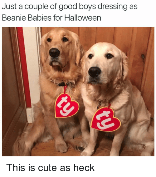 Cute, Funny, and Halloween: Just a couple of good boys dressing as  Beanie Babies for Halloween This is cute as heck