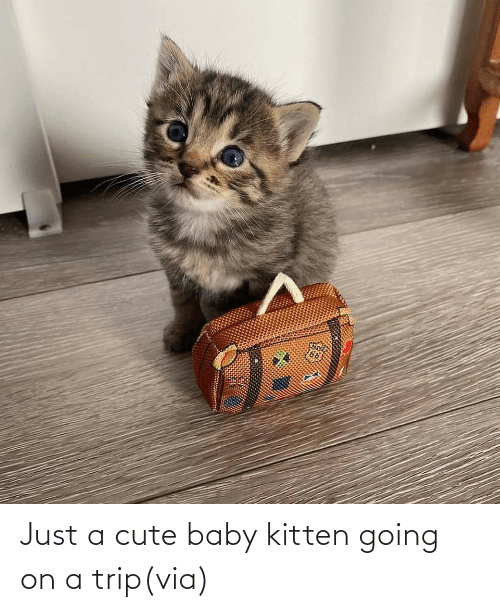 Baby: Just a cute baby kitten going on a trip(via)