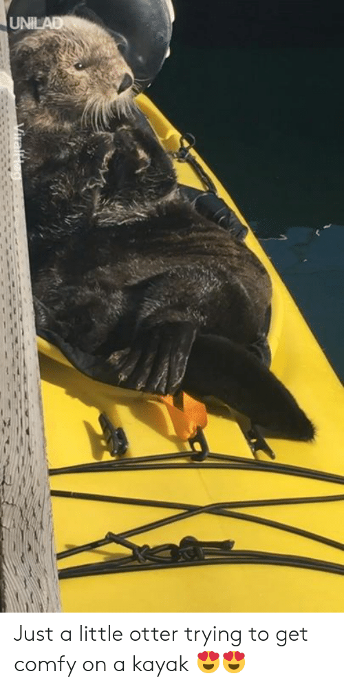otter: Just a little otter trying to get comfy on a kayak 😍😍