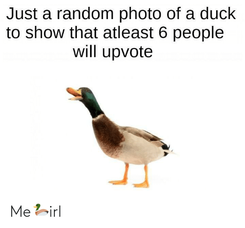 Upvote: Just a random photo of a duck  to show that atleast 6 people  will upvote Me🦆irl