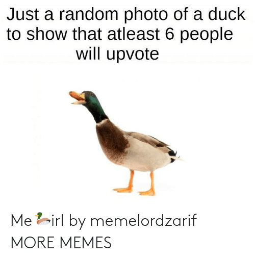 photo: Just a random photo of a duck  to show that atleast 6 people  will upvote Me🦆irl by memelordzarif MORE MEMES