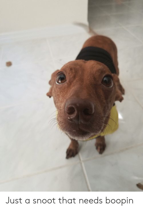 Just, Snoot, and That: Just a snoot that needs boopin