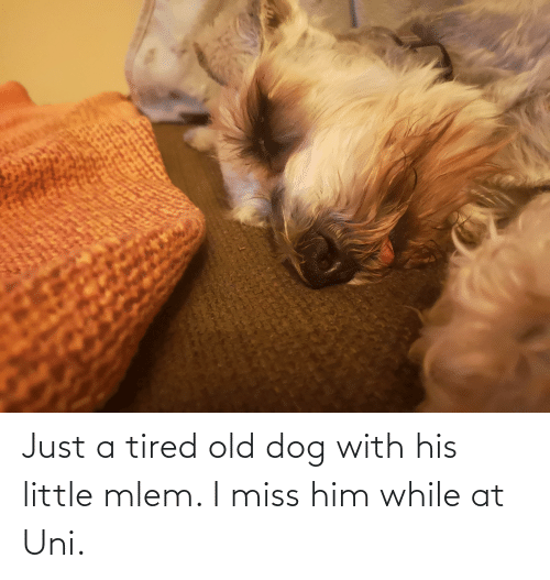 Mlem: Just a tired old dog with his little mlem. I miss him while at Uni.