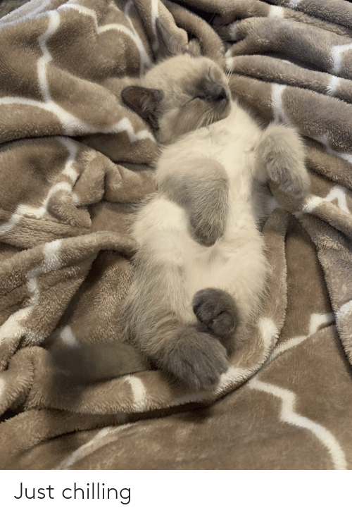 Aww Memes: Just chilling