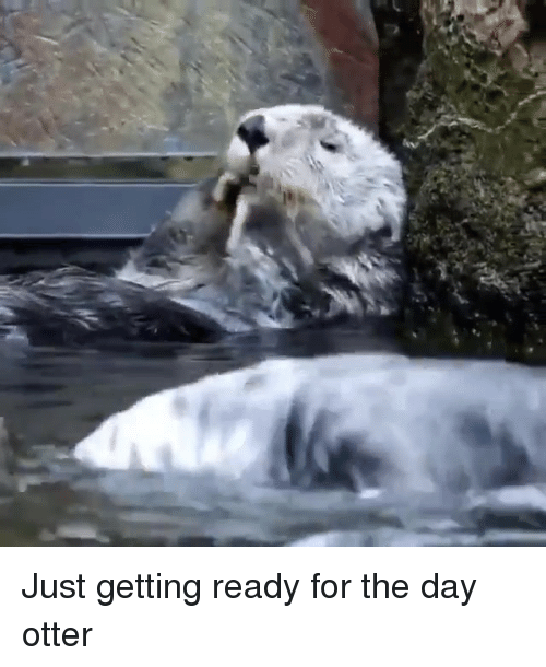 Memes, 🤖, and Otter: Just getting ready for the day otter