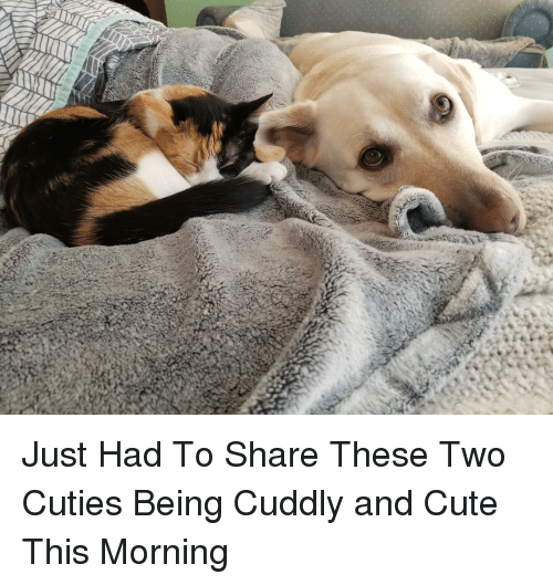 Cute, Share, and This