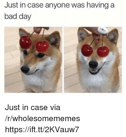 Bad, Bad Day, and Case: Just in case anyone was having a  bad day Just in case via /r/wholesomememes https://ift.tt/2KVauw7