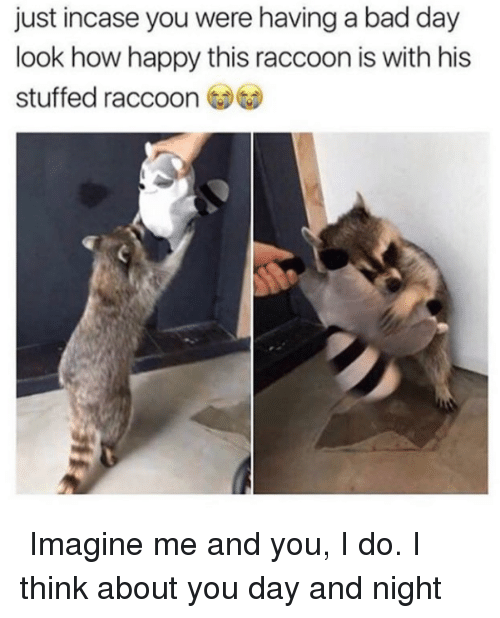 Bad, Bad Day, and Reddit: just incase you were having a bad day  look how happy this raccoon is with his  stuffed raccoon