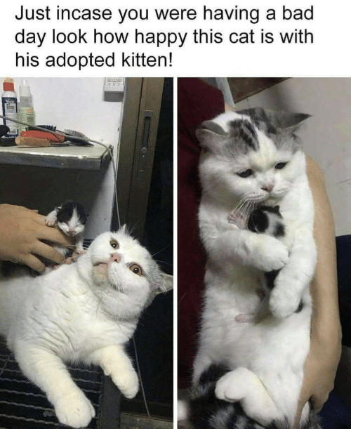 Bad, Bad Day, and Happy: Just incase you were having a bad  day look how happy this cat is with  his adopted kitten!