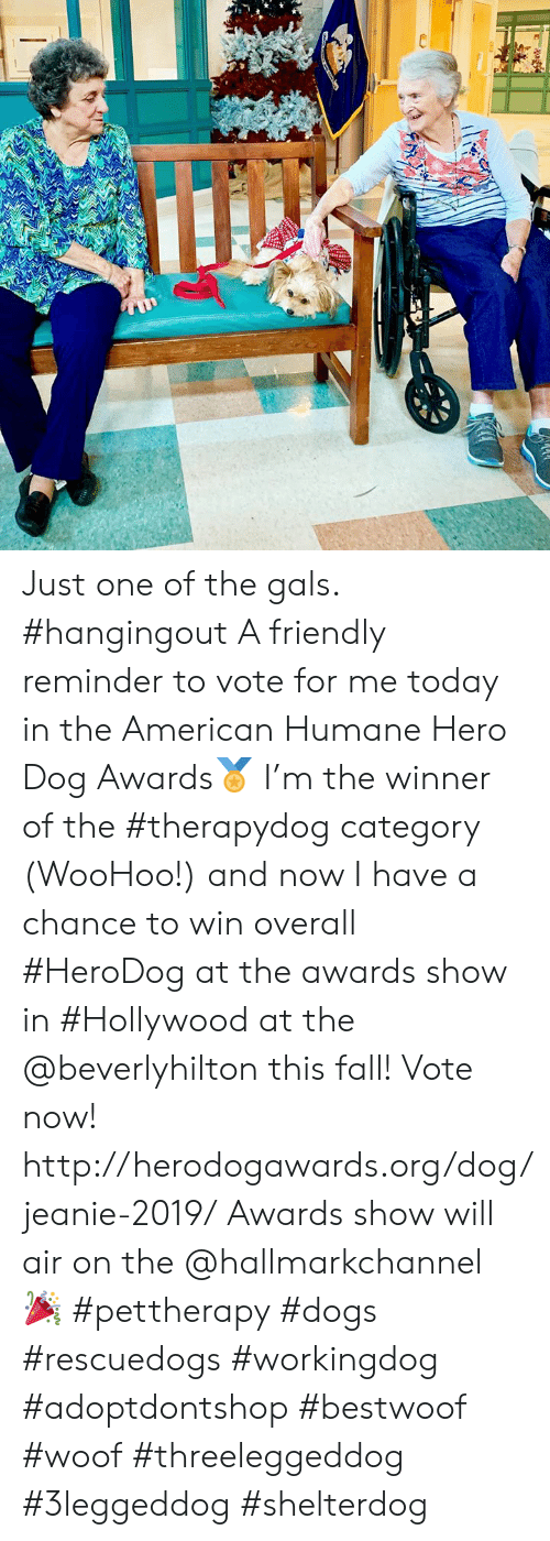 Hallmarkchannel: Just one of the gals. #hangingout  A friendly reminder to vote for me today in the American Humane Hero Dog Awards🏅 I'm the winner of the #therapydog category (WooHoo!) and now I have a chance to win overall #HeroDog at the awards show in #Hollywood at the @beverlyhilton this fall!  Vote now!  http://herodogawards.org/dog/jeanie-2019/ Awards show will air on the @hallmarkchannel 🎉  #pettherapy #dogs  #rescuedogs #workingdog #adoptdontshop  #bestwoof #woof  #threeleggeddog #3leggeddog #shelterdog