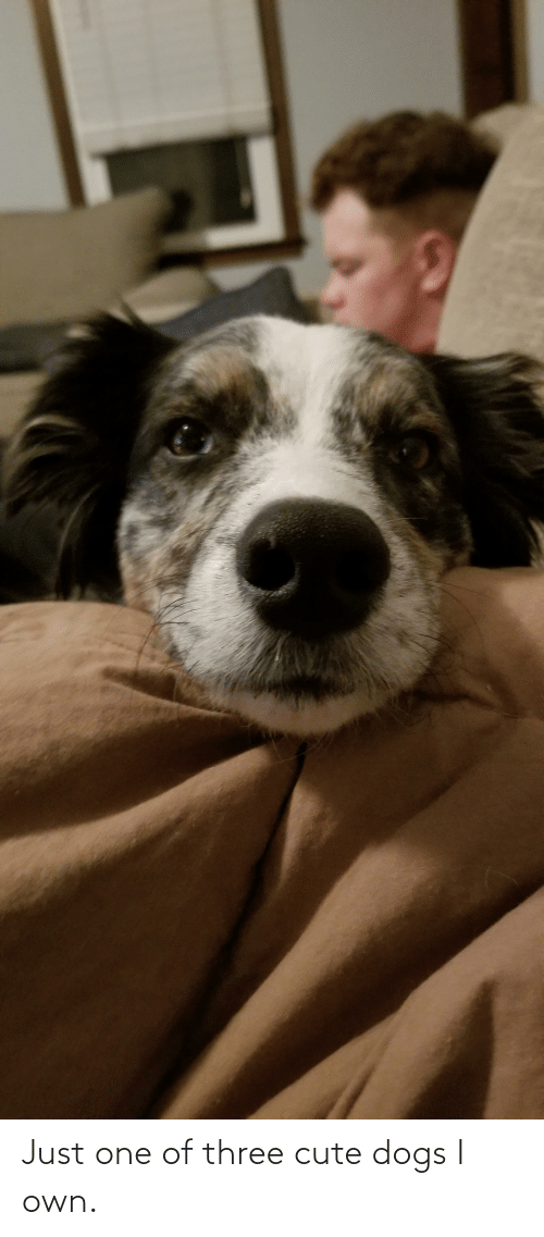 cute dogs: Just one of three cute dogs I own.