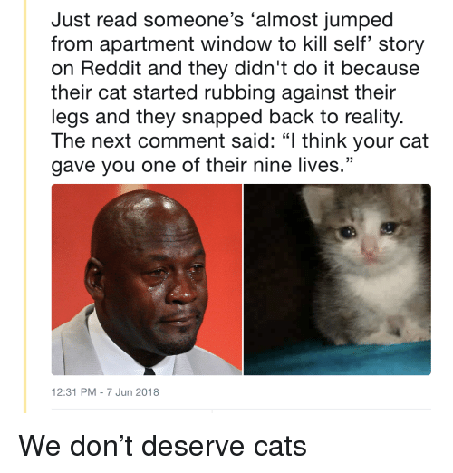 """Cats, Reddit, and Jumped: Just read someone's 'almost jumped  from apartment window to kill self story  on Reddit and they didn't do it because  their cat started rubbing against their  legs and they snapped back to reality.  The next comment said: """"l think your cat  gave you one of their nine lives.""""  12:31 PM - 7 Jun 2018 <p>We don't deserve cats</p>"""