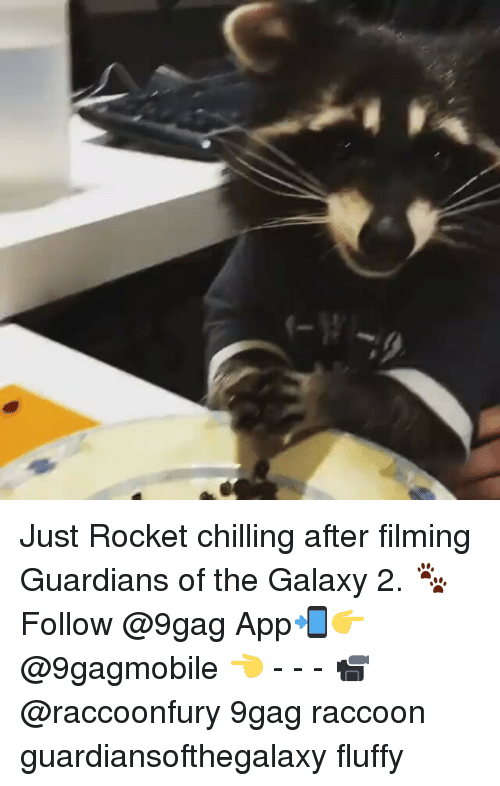Fluffiness: Just Rocket chilling after filming Guardians of the Galaxy 2. 🐾 Follow @9gag App📲👉@9gagmobile 👈 - - - 📹@raccoonfury 9gag raccoon guardiansofthegalaxy fluffy