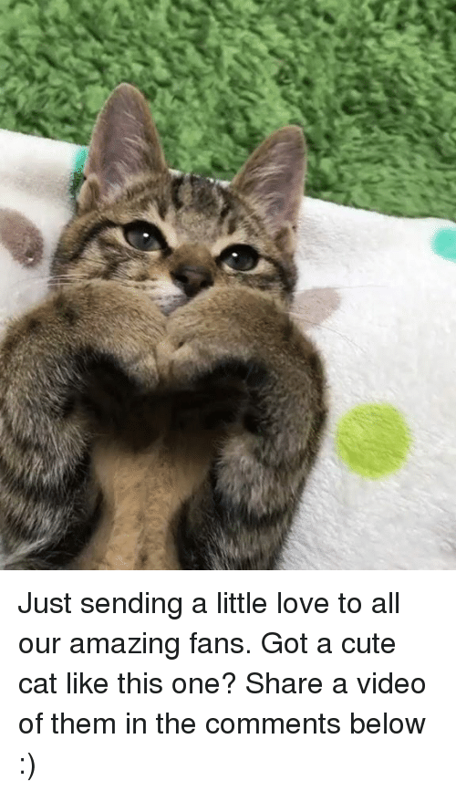Memes, 🤖, and Cute Cats: Just sending a little love to all our amazing fans. Got a cute cat like this one? Share a video of them in the comments below :)