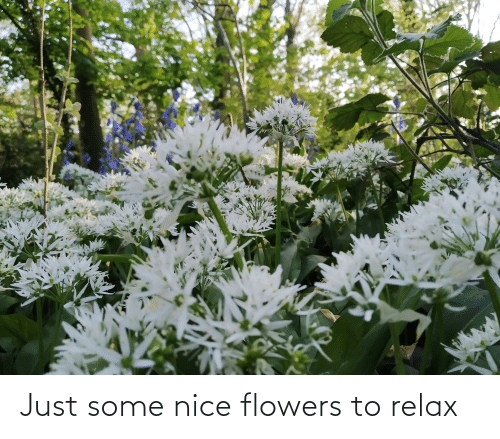 Flowers: Just some nice flowers to relax