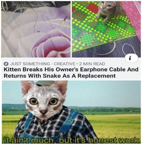 Work, Snake, and Cable: JUST SOMETHING CREATIVE 2 MIN READ  Kitten Breaks His Owner's Earphone Cable And  Returns With Snake As A Replacement  It ainit much, but it's honest work