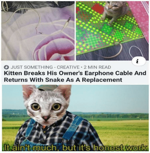 cable: JUST SOMETHING CREATIVE 2 MIN READ  Kitten Breaks His Owner's Earphone Cable And  Returns With Snake As A Replacement  It ainit much, but it's honest.work