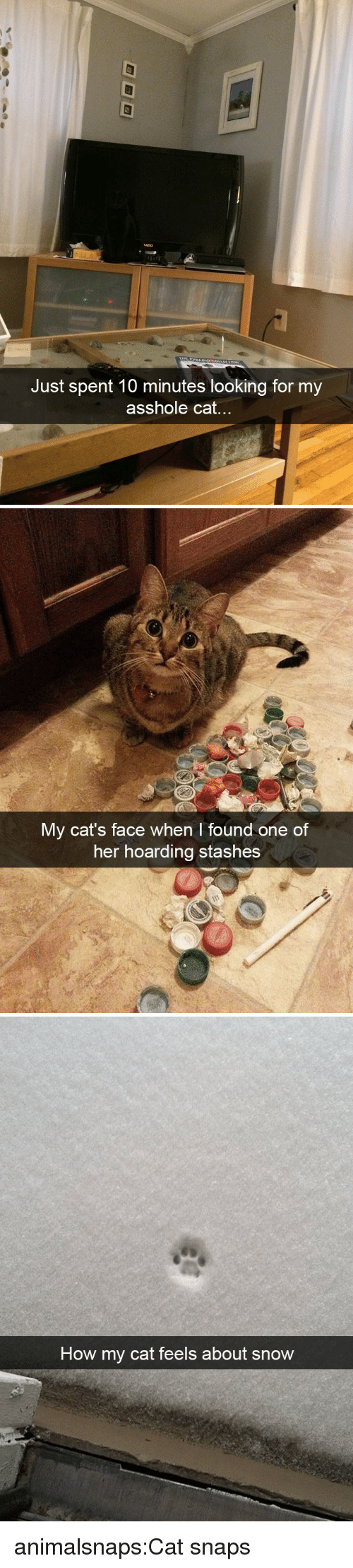 hoarding: Just spent 10 minutes looking for my  asshole cat...   My cat's face when I found one of  her hoarding stashes   How my cat feels about snow animalsnaps:Cat snaps