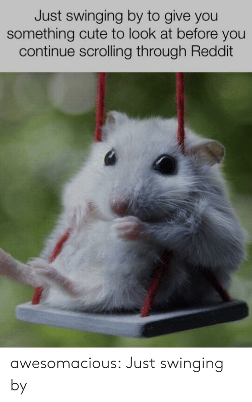 swinging: Just swinging by to give you  something cute to look at before you  continue scrolling through Reddit awesomacious:  Just swinging by