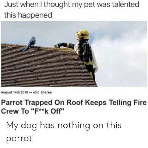 "Dog Has: Just when I thought my pet was talented  this happened  August 14th 2018-43K Shares  Parrot Trapped On Roof Keeps Telling Fire  Crew To ""F**k Off"" My dog has nothing on this parrot"