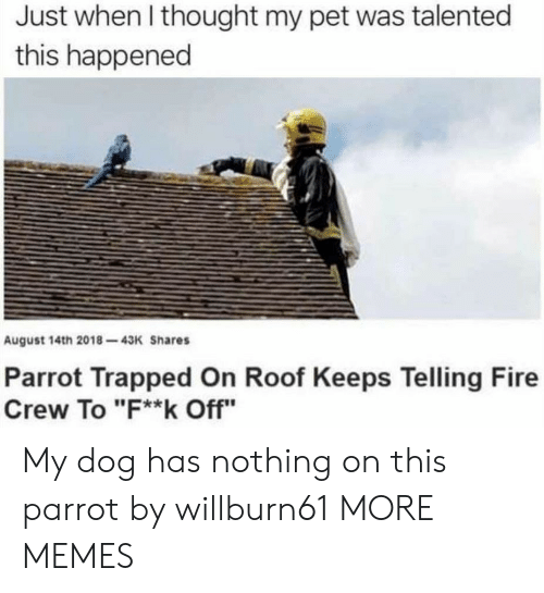 "Dog Has: Just when I thought my pet was talented  this happened  August 14th 2018-43K Shares  Parrot Trapped On Roof Keeps Telling Fire  Crew To ""F**k Off"" My dog has nothing on this parrot by willburn61 MORE MEMES"