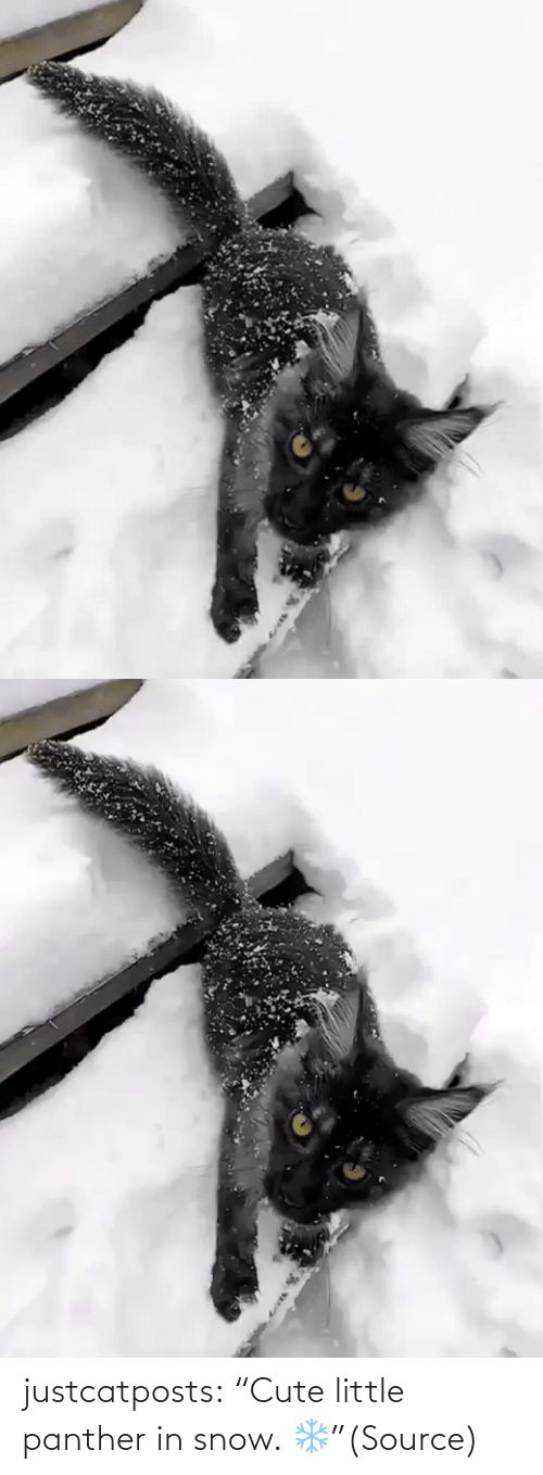 """panther: justcatposts:  """"Cute little panther in snow. ❄️""""(Source)"""