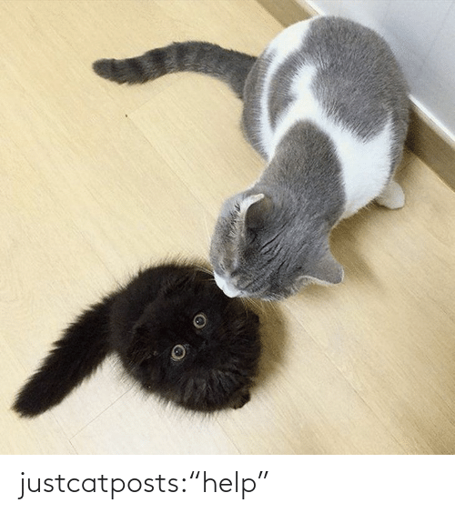 """Blank: justcatposts:""""help"""""""