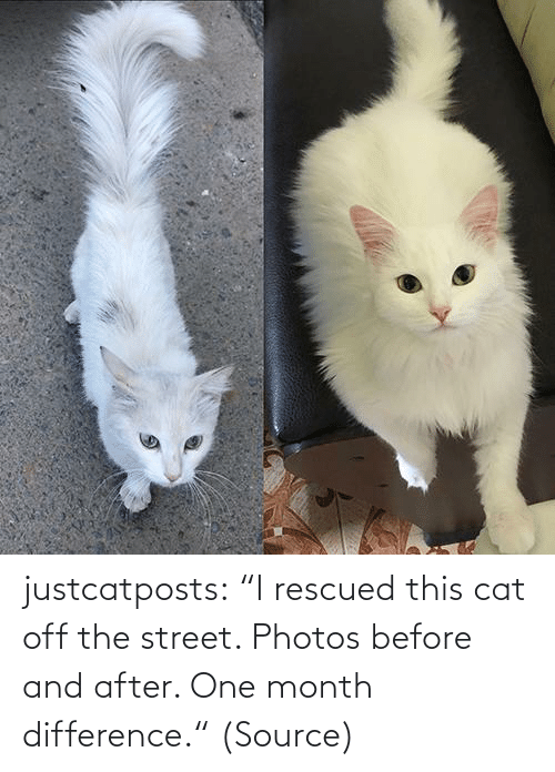 "source: justcatposts:  ""I rescued this cat off the street. Photos before and after. One month difference."" (Source)"
