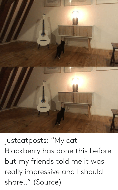 "share: justcatposts:  ""My cat Blackberry has done this before but my friends told me it was really impressive and I should share.."" (Source)"