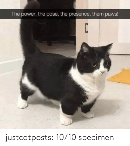 10 10: justcatposts:  10/10 specimen