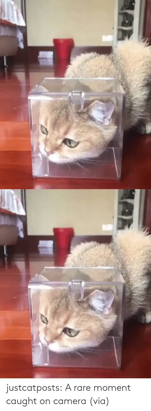 moment: justcatposts:  A rare moment caught on camera (via)