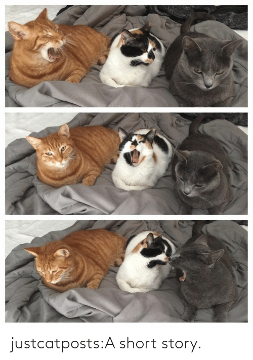 short: justcatposts:A short story.