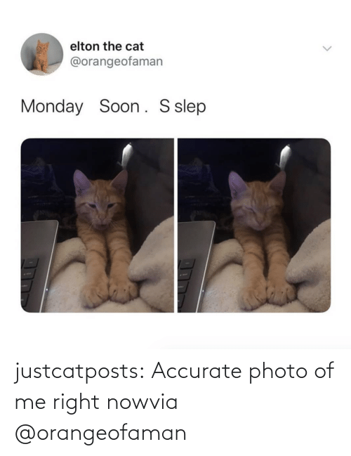 Of Me: justcatposts:  Accurate photo of me right nowvia @orangeofaman