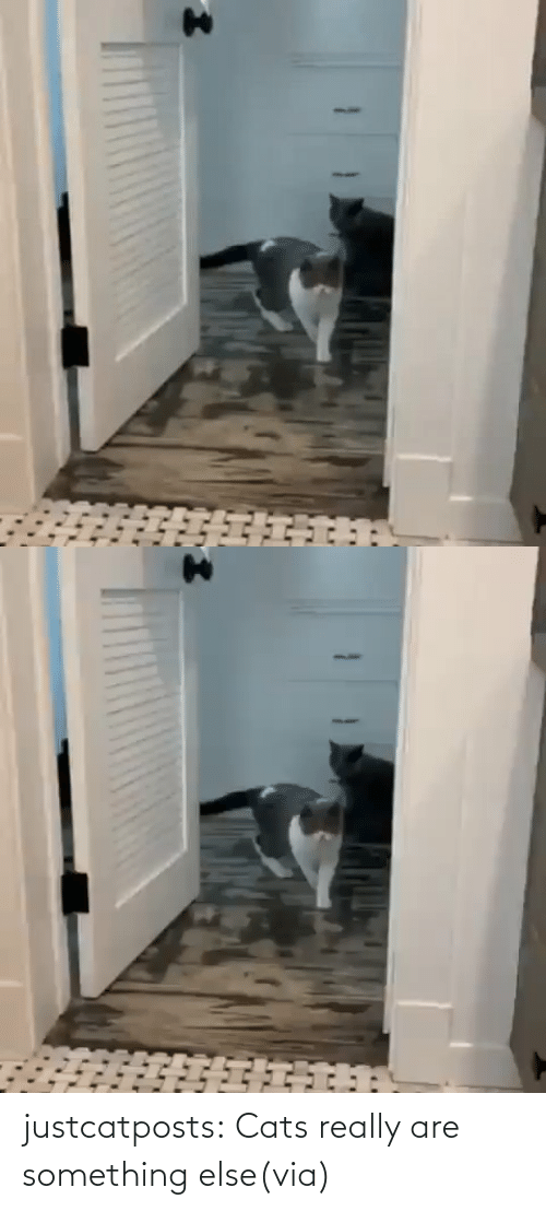 Something Else: justcatposts:  Cats really are something else(via)