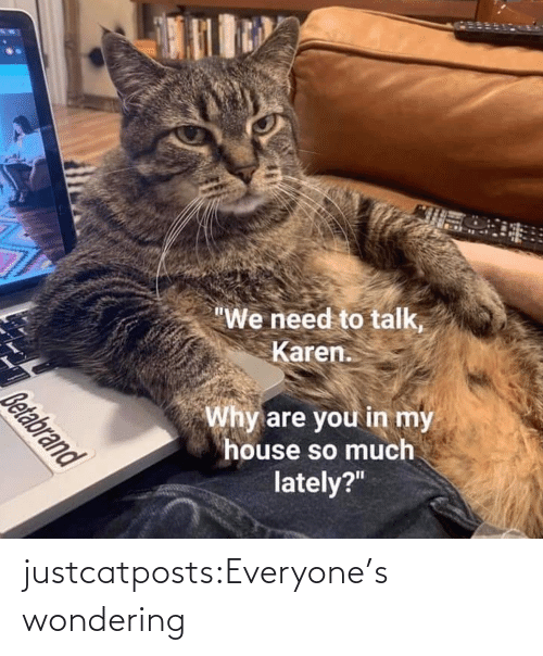 wondering: justcatposts:Everyone's wondering