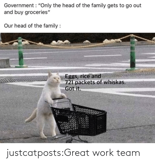 great: justcatposts:Great work team