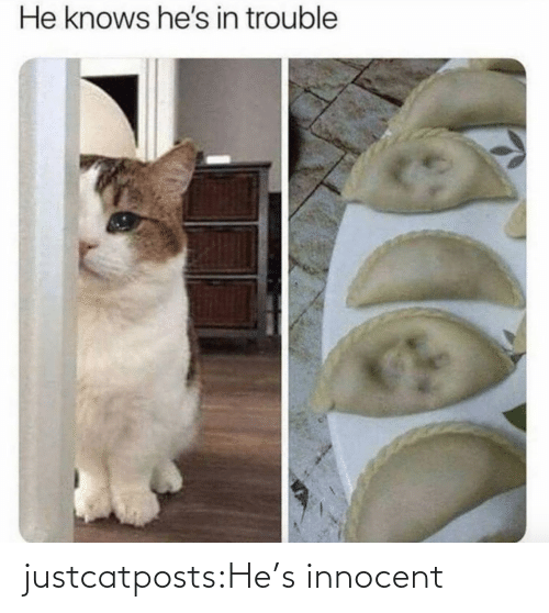 hes: justcatposts:He's innocent