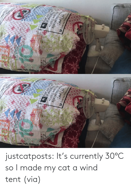 made: justcatposts:  It's currently 30°C so I made my cat a wind tent (via)