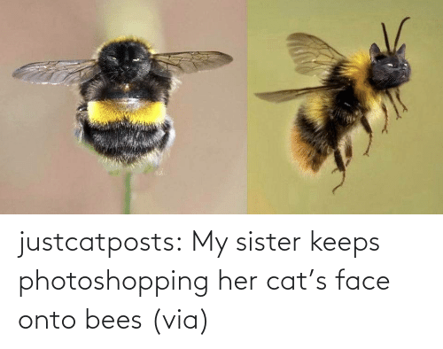 Funny: justcatposts:  My sister keeps photoshopping her cat's face onto bees (via)