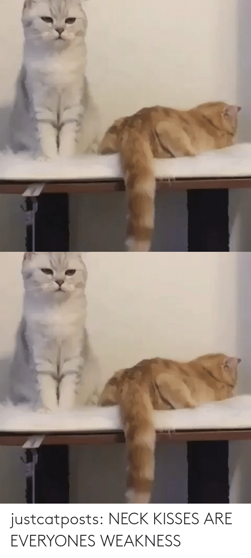neck: justcatposts:  NECK KISSES ARE EVERYONES WEAKNESS