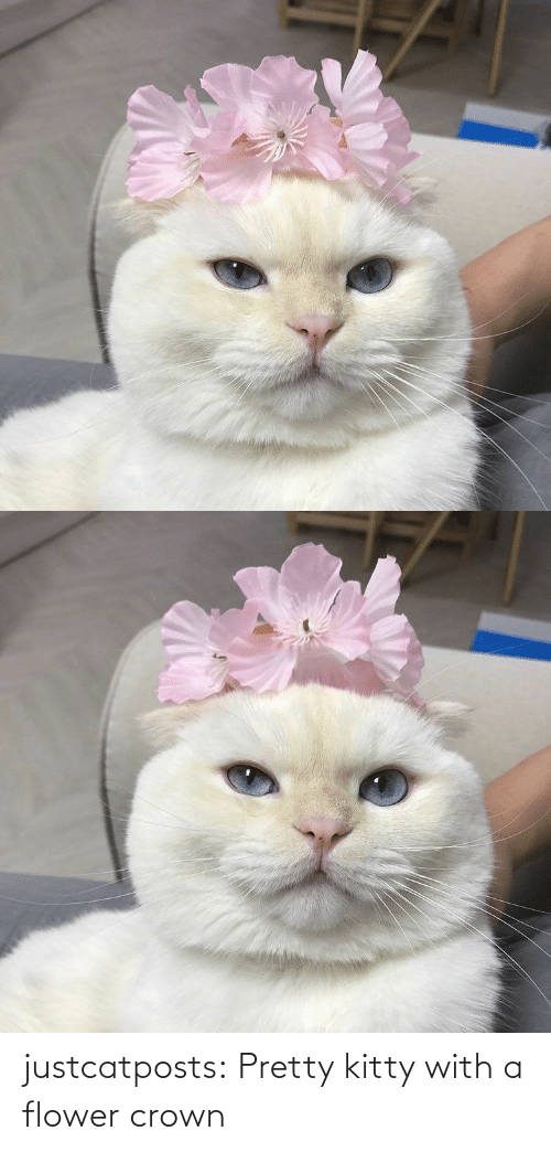 kitty: justcatposts:  Pretty kitty with a flower crown